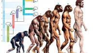 شرح نظرية التطور