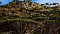 جزيرة سقطرى أغرب مكان في العالم