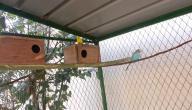 كيفية الاعتناء بالعصافير