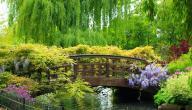 مقال عن جمال الطبيعة