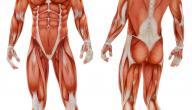 ما هو جسم الانسان