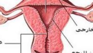 ما هو تليف الرحم