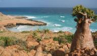 جزر سقطرى