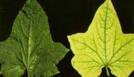 نقص العناصر في النباتات