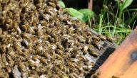 كيفية تربية النحل