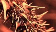 ما هو طعام اهل النار