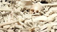 ما هو عدد عظام جسم الانسان