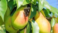 ما هى الحشرات النافعة