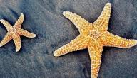 فوائد نجمة البحر