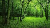 فوائد الغابات وكيفية المحافظة عليها