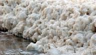 فوائد وأضرار زبدة البحر