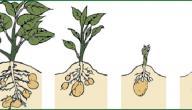 مراحل النمو عند النبات