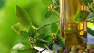 فوائد زيت الزيتون للجيوب الأنفية