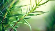 فوائد عشب الحرجل