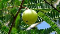 فوائد عشبة الأملج للبشرة