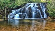 فوائد ماء الشيح الجبلي