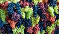 فوائد رجيم العنب