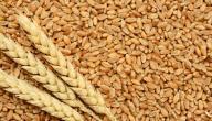 فوائد وأضرار جنين القمح