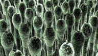 الفطريات في الجسم