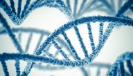 مراحل الهندسة الوراثية