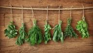 فوائد عشبة هند شعيرة