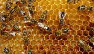 فوائد العكبر والعسل