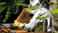 كيفية تربية النحل فى ليبيا
