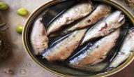 فوائد سمك السردين للأطفال
