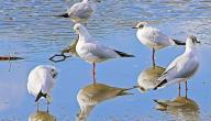 ما هي الطيور