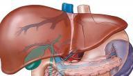 ما هي امراض الكبد