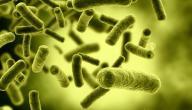 الفطريات والبكتيريا