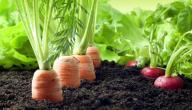 عيوب الزراعة العضوية