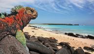 معلومات عن جزر الغالاباغوس