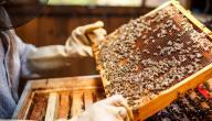 كيفية تربية النحل وإنتاج العسل