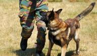 مواصفات الكلاب البوليسية