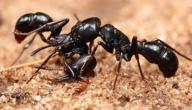 معلومات عن عالم النمل