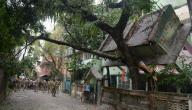 قوة زلزال نيبال