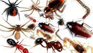 أسهل طرق القضاء على الحشرات في البيت
