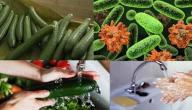 ما هي بكتيريا اي كولاي