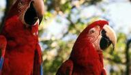 معلومات عن عالم الطيور والحشرات