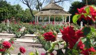 مدينة الورود الجزائرية