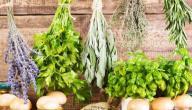طريقة عمل حبوب الأعشاب للتخسيس