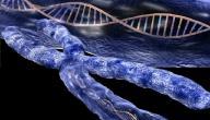 مراحل الانقسام الميتوزي