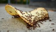 أفضل الطرق للقضاء على النمل