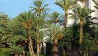مدينة جرجيس التونسية