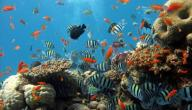 تقرير عن عالم البحار