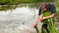 تقرير عن دور عالم البيئة