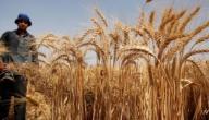 مظاهر حياة الإنسان بعد معرفة الزراعة