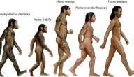 ما هي نظرية داروين