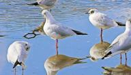 صفات الطيور وأنواعها